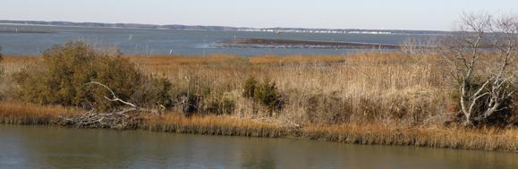 banner-jan-2011-landing2.jpg