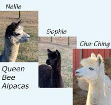 melissa-alpacas2_med