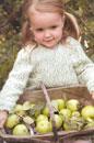 rowanbk19honeysuckle_small.jpg